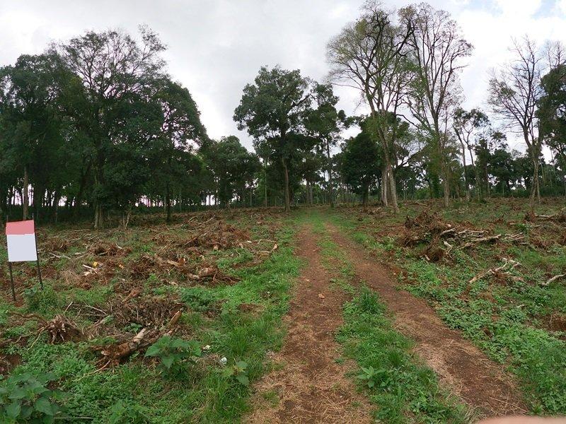 Terreno - Efapi